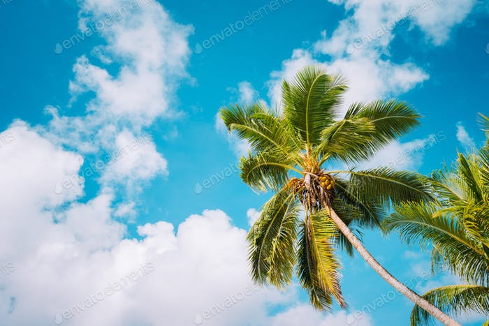 Coconut palm trees on tropical beach against a pretty blue sky with white clouds