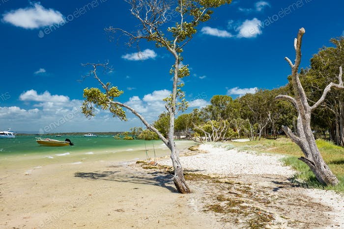 Tropical beach with trees on the east side of Bribie Island, Que