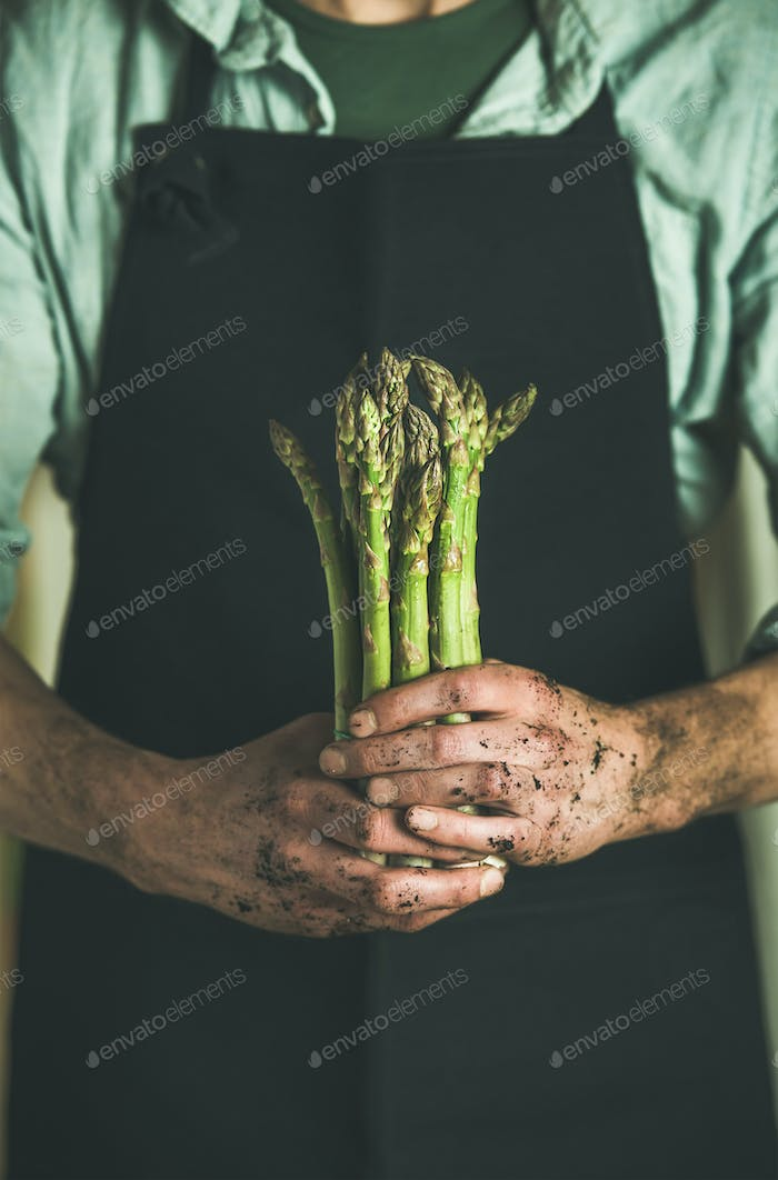 Bunch of fresh uncooked seasonal asparagus in dirty farmer's hands