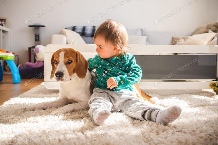 Baby hugging tight Beagle dog in sunny room