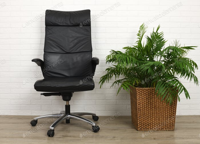 Office armchair and houseplant palm