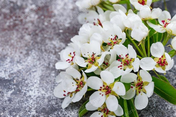 Blühender Apfelbaum. Frühlings-Hintergrund