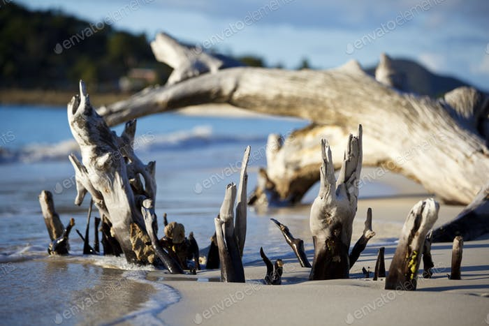 Caribbean Beach With Driftwood, Antigua