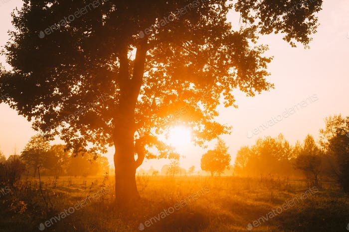 Sunset Or Sunrise In Misty Forest Landscape. Sun Sunshine With N