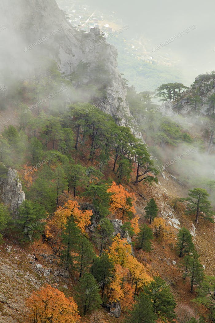Mountainside with forest in the fog