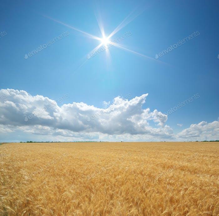 Naturlandschaft der Weizenwiese