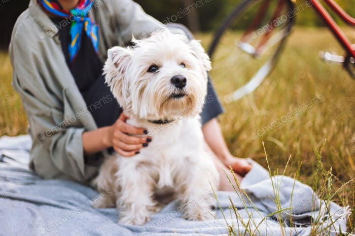 Close up beautiful little white dog sitting on picnic blanket wi
