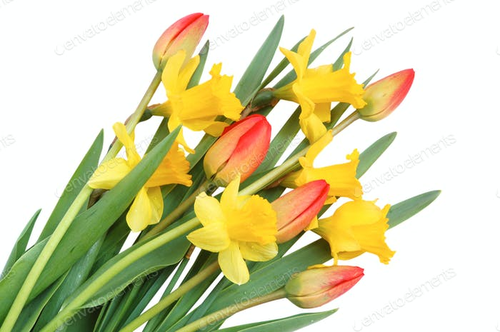 Rote Tulpen und gelbe Narzisse