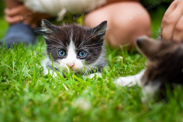 Entzückende Kätzchen im Freien auf grünem Gras spielen mit Kindern