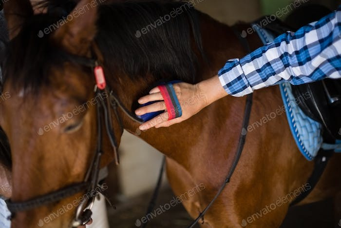 Man grooming the horse in the stable