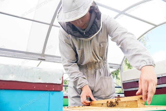 Young Beekeeper in Apiary