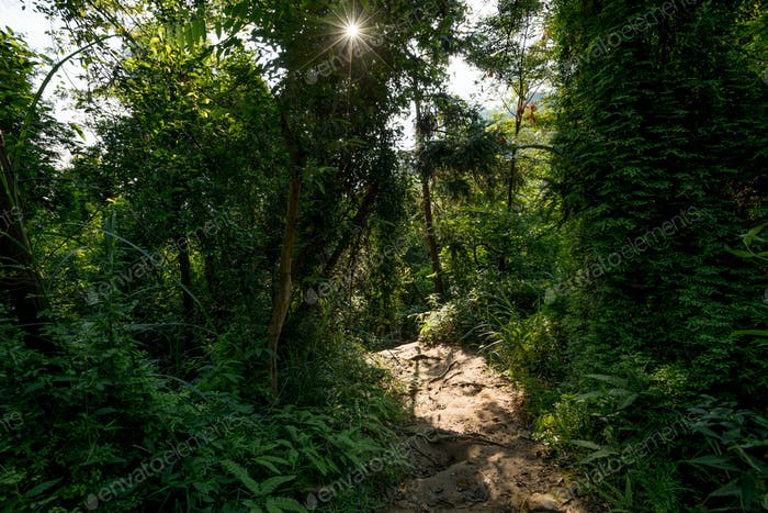 Trail in sunrise tropical forest