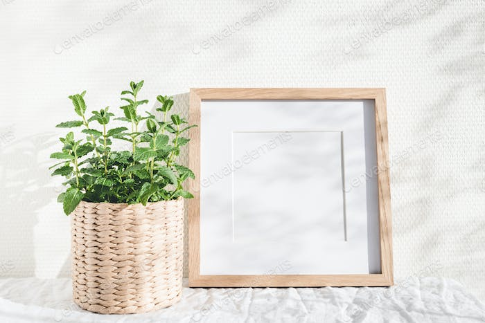 Square Photo Frame and Mint Plant.