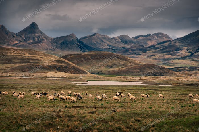 Dramatic rural mountain landscape with sheep in the foreground, Tibet