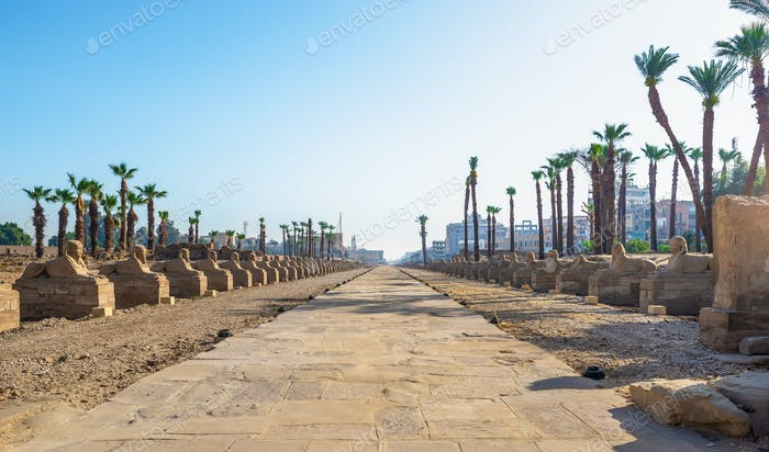 Temple Luxor sphinxes