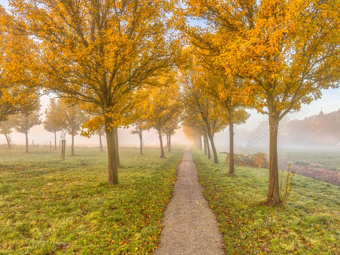 Group of trees with yellow autumn leaves