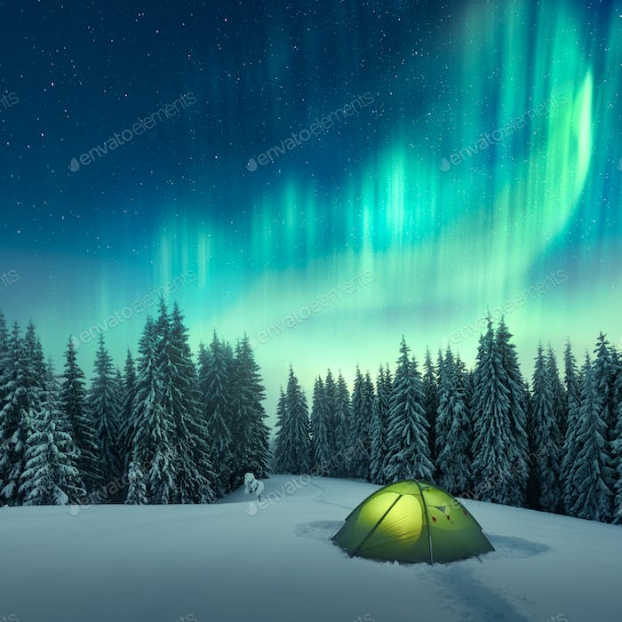 Northern lights in winter forest