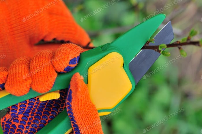 Hands in gloves of gardener doing maintenance work, cutting the