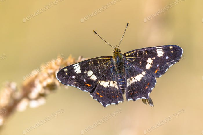 Map butterfly on bright background