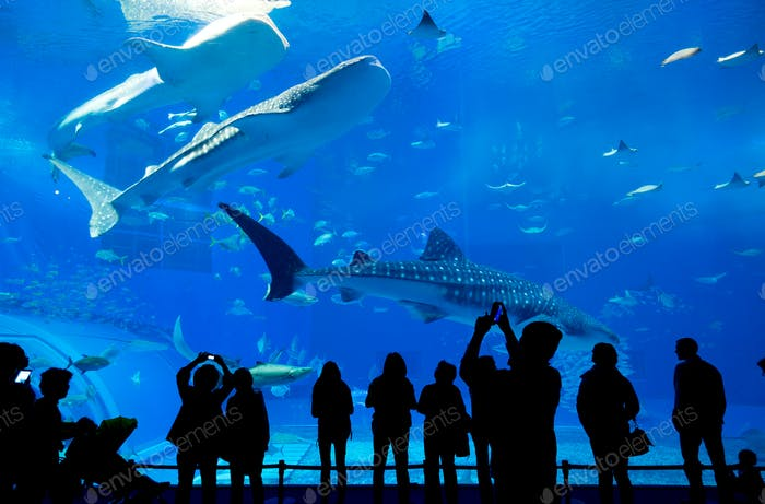 Oceanarium in Okinawa city