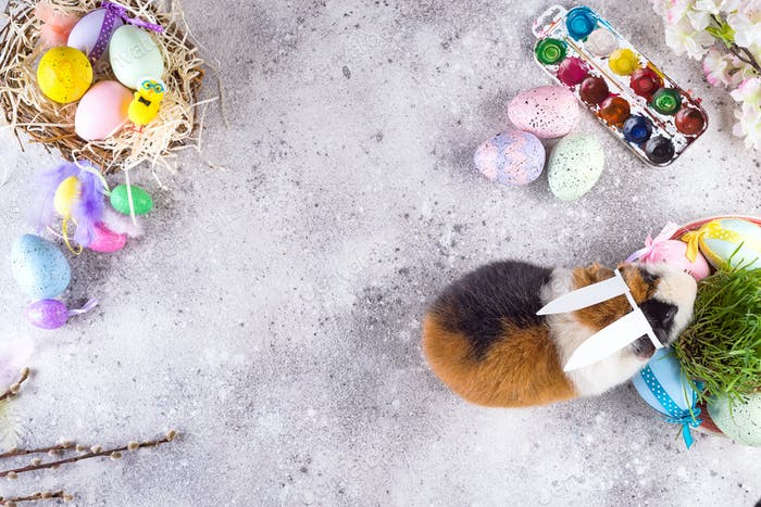 Guinea pig with the ears of the Easter bunny on the stone background of colored eggs. Easter holiday
