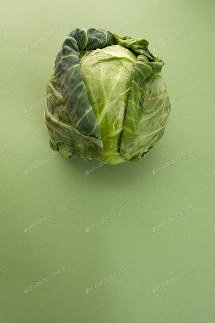 Young cabbage on a light green pastel background.