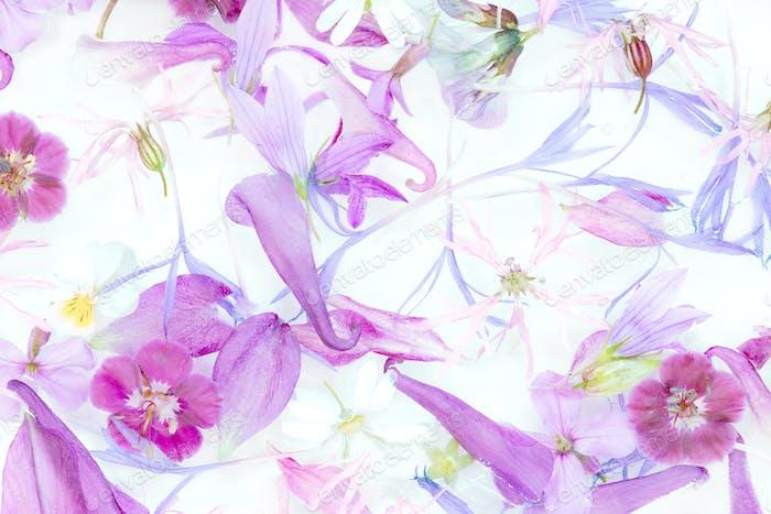 Violett zartes Blumenmuster