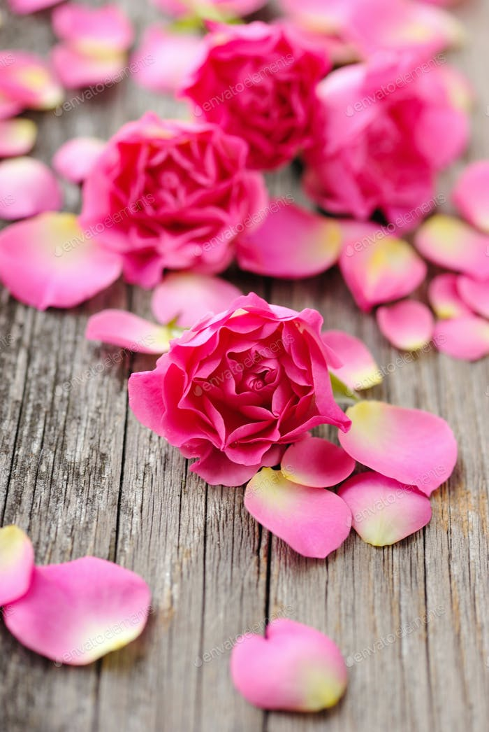 Pink rose and petals on a wooden background