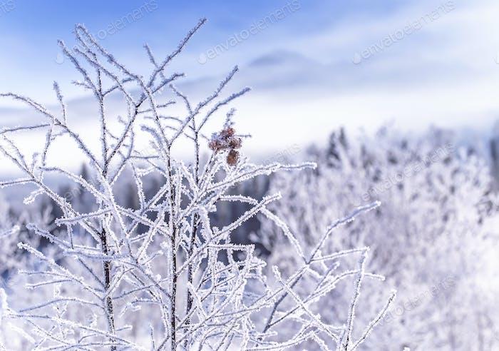 gefrorene Winterzweige