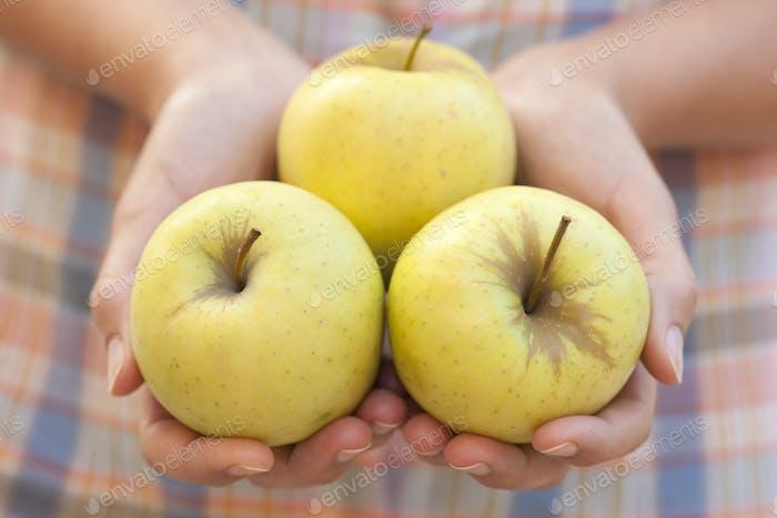 Green apples in hands
