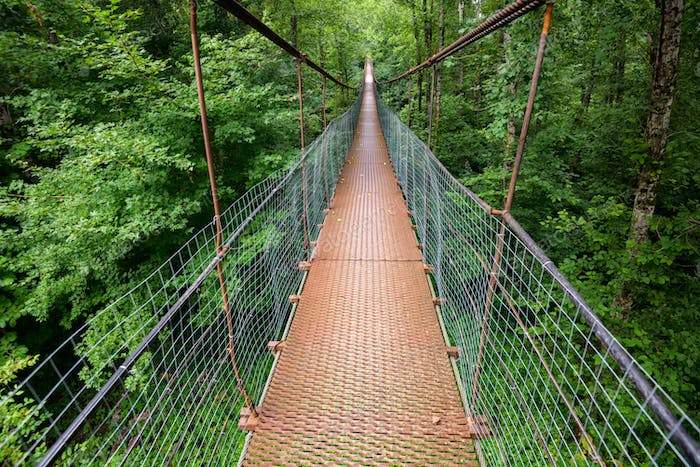 Narrow metal foot bridge across green forest in summer