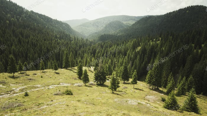 Mountain landscape with pine trees in morning