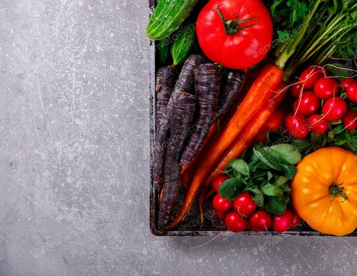 Bündel frische bunte Karotten mit grünen Blättern, lila Karotten und Radieschen