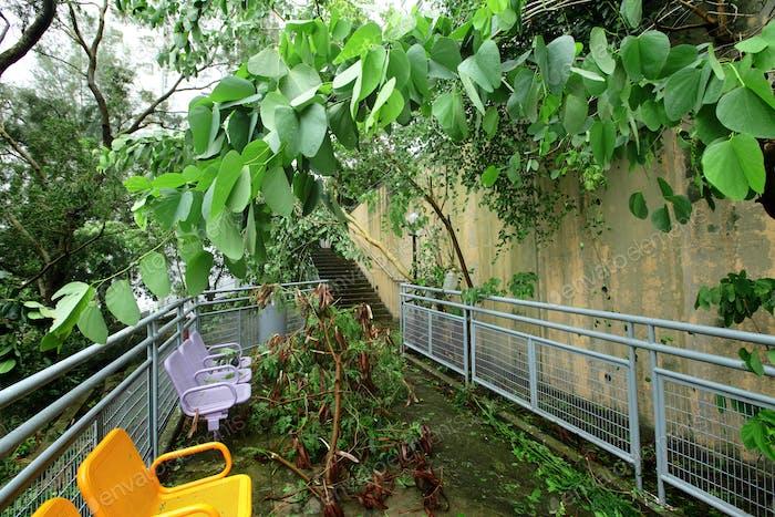 Taifunschaden
