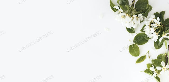 Blooming spring pear branches on a white background