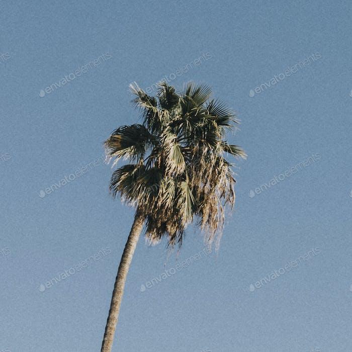 Palm tree in the bight blue sky