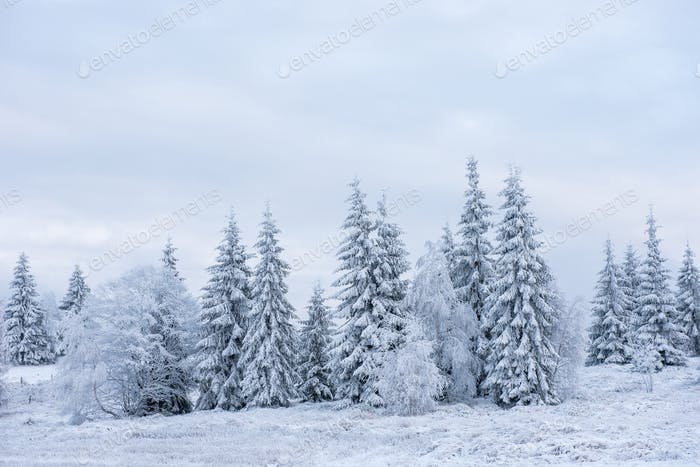 Snow covered frozen trees in the mountains. Christmas time, winter holiday concept