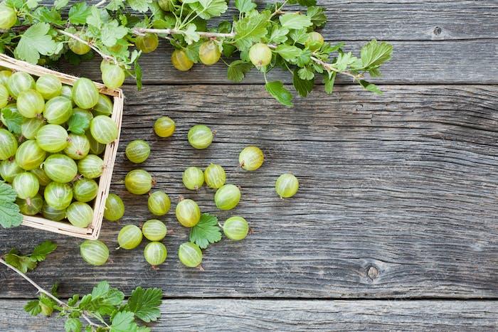Gooseberry harvest. Ripe gooseberries in the basket