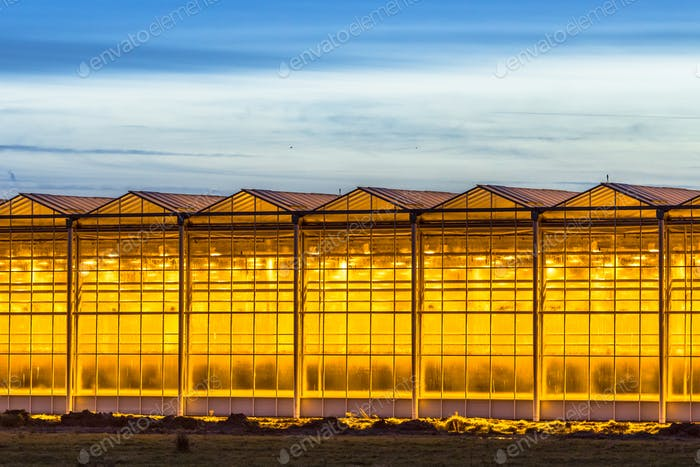 Illuminated industrial greenhouse crop