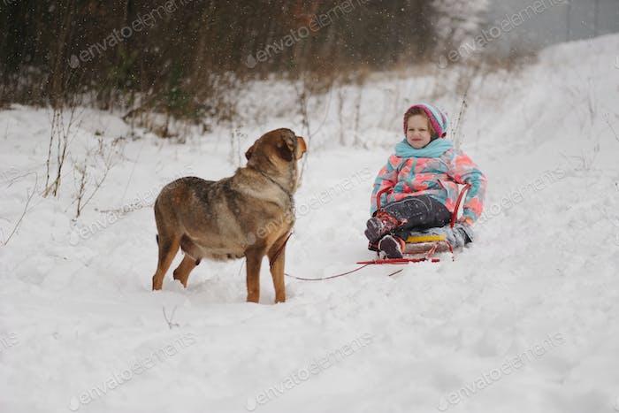 Hund rollt kleines Mädchen auf Schlitten