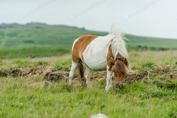 wild horse in windy steps