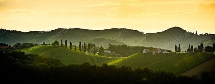 Panorama of Styrian vineyard in Austria