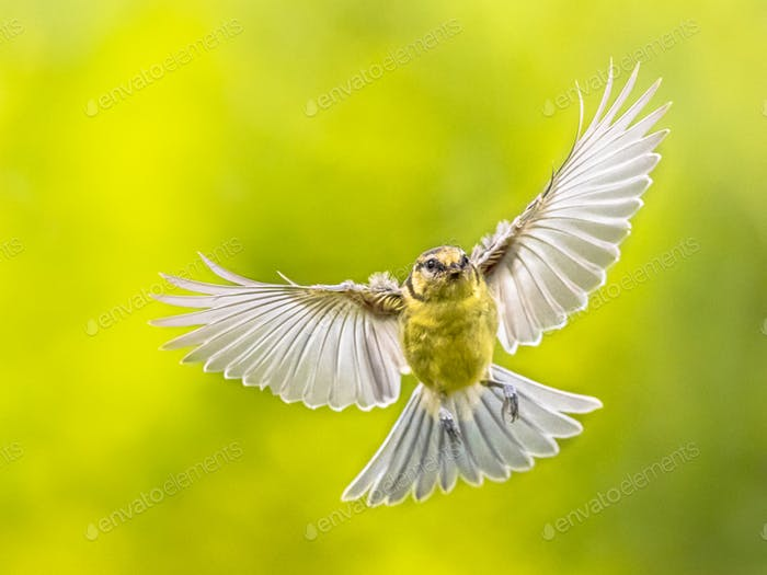 Bird in Flight on vivid green background