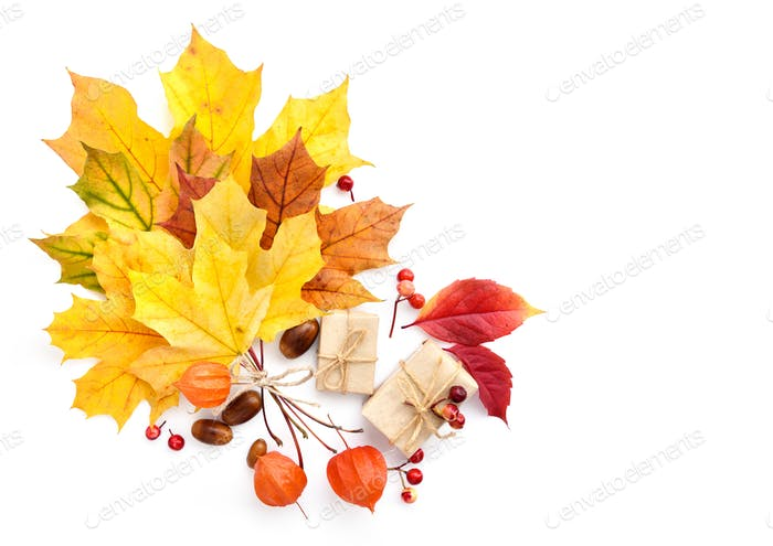Autumn composition with maple leaves on a white background. Top