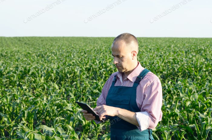 Farmer with tablet computer inspecting corn field summer sunny d