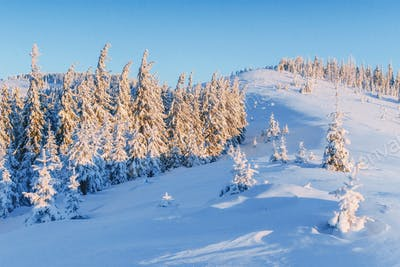 Mysterious winter landscape majestic mountains in winter. Magical winter snow covered tree. Winter