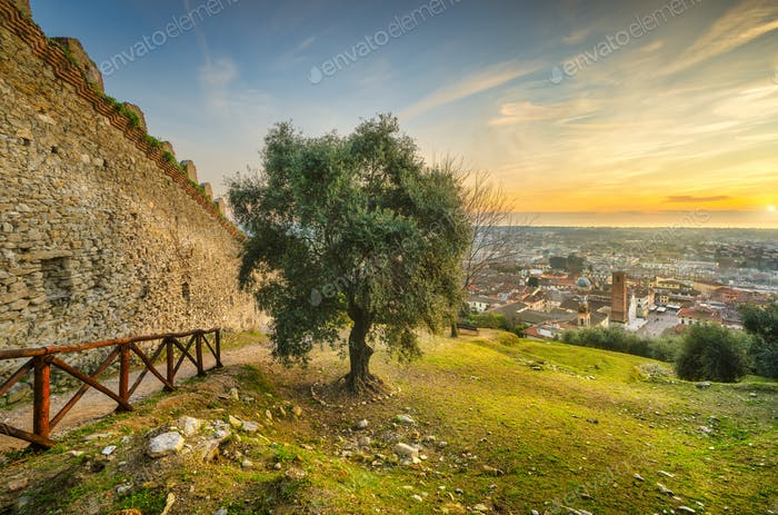 Pietrasanta aerial view from Rocca di Sala fortress at sunset, Versilia Lucca Tuscany Italy