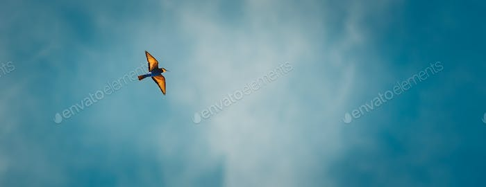 Bee eater in the sky