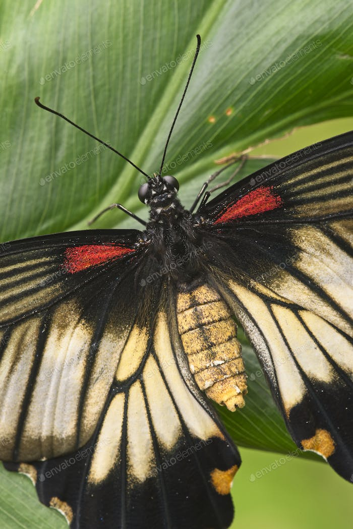 Close up of tropical butterfly