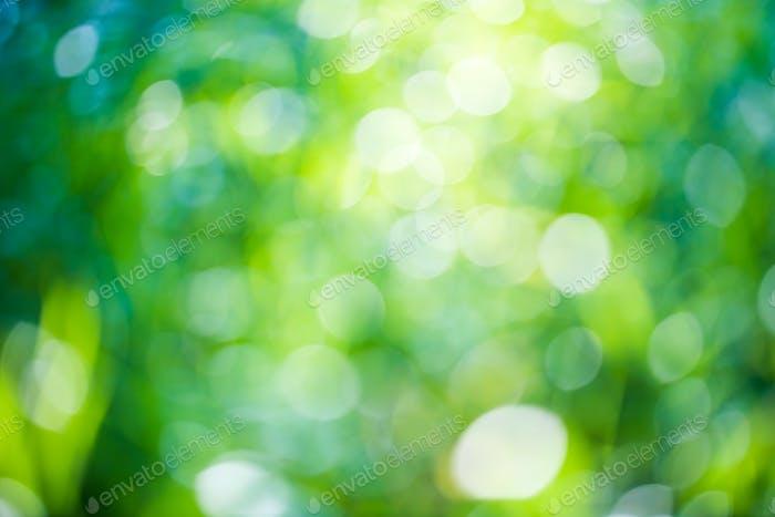Grüner Bokeh natürlicher Hintergrund